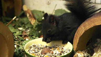 Tierbabys - Süß Und Wild! - Heute: Eichhörnchen-nachwuchs