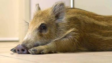 Tierbabys - Süß Und Wild! - Folge Vom 22.05.2021