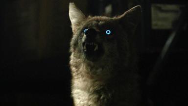 Teen Wolf - Abendliche Verwirrtheit