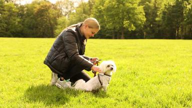 Startup News - Hightech Für Den Hund