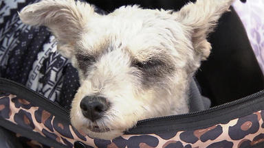 Hundkatzemaus - Thema U.a.: Hund \