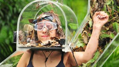 Ich Bin Ein Star - Holt Mich Hier Raus - Tag 16: Das Große Dschungel-finale