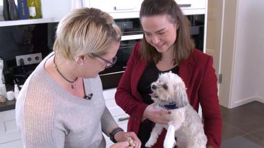 Hundkatzemaus - Heute U.a.: Checkpunkte - Wann Ein Tier Zum Tierarzt Muss?