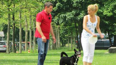 Der V.i.p. Hundeprofi - U.a. Mit: Sportmoderatorin Katrin Müller-hohenstein
