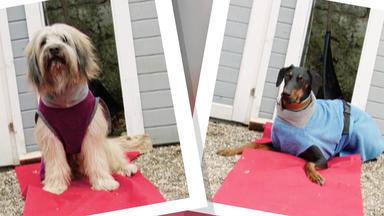 Hundkatzemaus - Heute U.a.: Bademäntel Für Hunde
