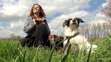 Hundkatzemaus - Heute U.a.: Hundesport-trend Dummy-training