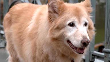 Hundkatzemaus - Thema U.a.: Hundegeruch