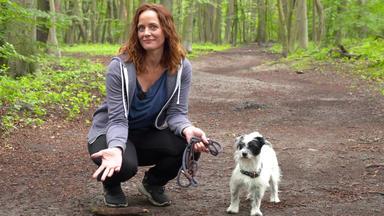 Hundkatzemaus - Heute U.a.: Abenteuer Waldspaziergang