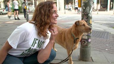 Hundkatzemaus - Heute U.a.: Hunde In Der Großstadt