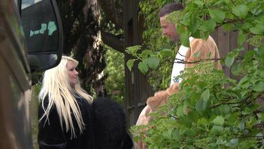 Die Trovatos - Detektive Decken Auf - 35-jährige Geht Im Affenkostüm Betteln Und Belügt Ihre Familie