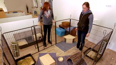 Hundkatzemaus - Kostencheck Kleintier