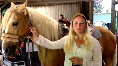 Die Pferdeprofis - Spanier-wallach \