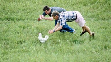 Die Camper - Glückliche Hühner