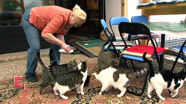 Exklusiv - Die Reportage - Tier-messies - Wenn Tierliebe Zur Sucht Wird