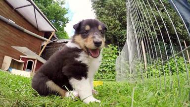 Tierbabys - Süß Und Wild! - Generation Lassie