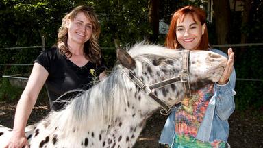Hundkatzemaus - Blinde Pferde