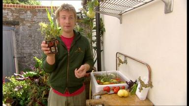 Jamie At Home - Tomaten